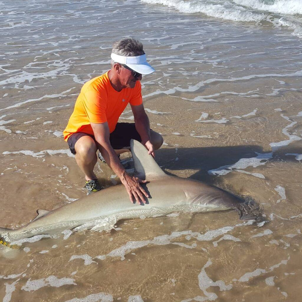 Jerry Gerwick with a 5 foot blacktip shark from Padre Island Texas