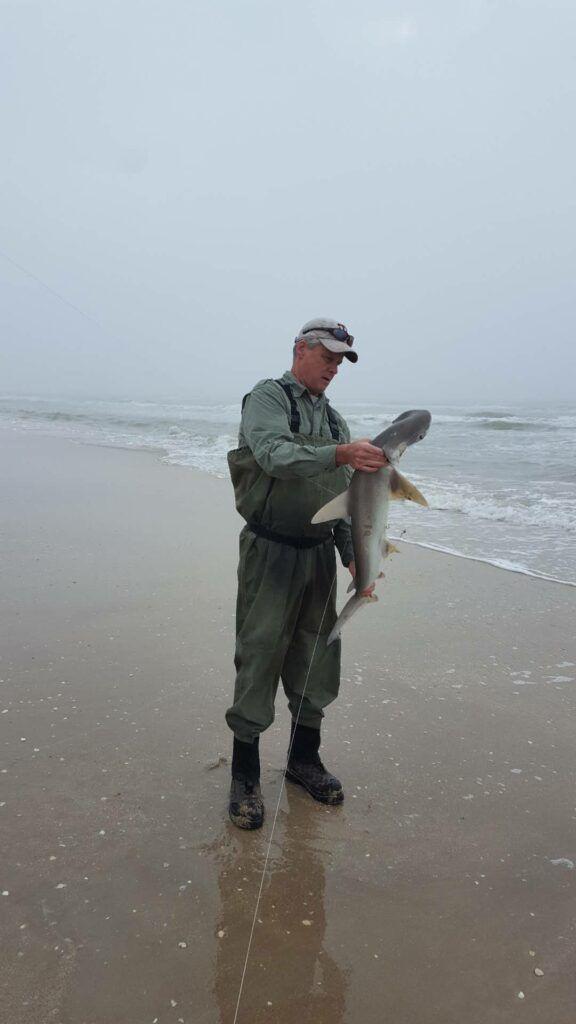 bonnethead shark caught from the beach