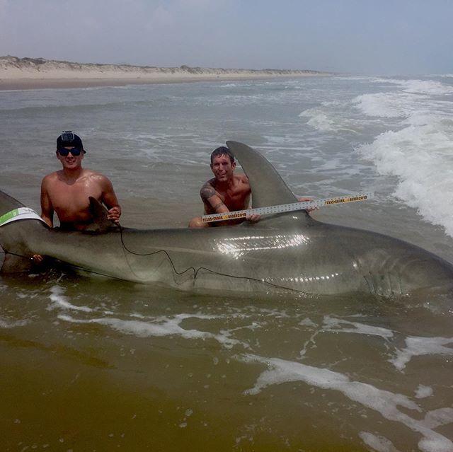 hammerhead shark caught from the beach