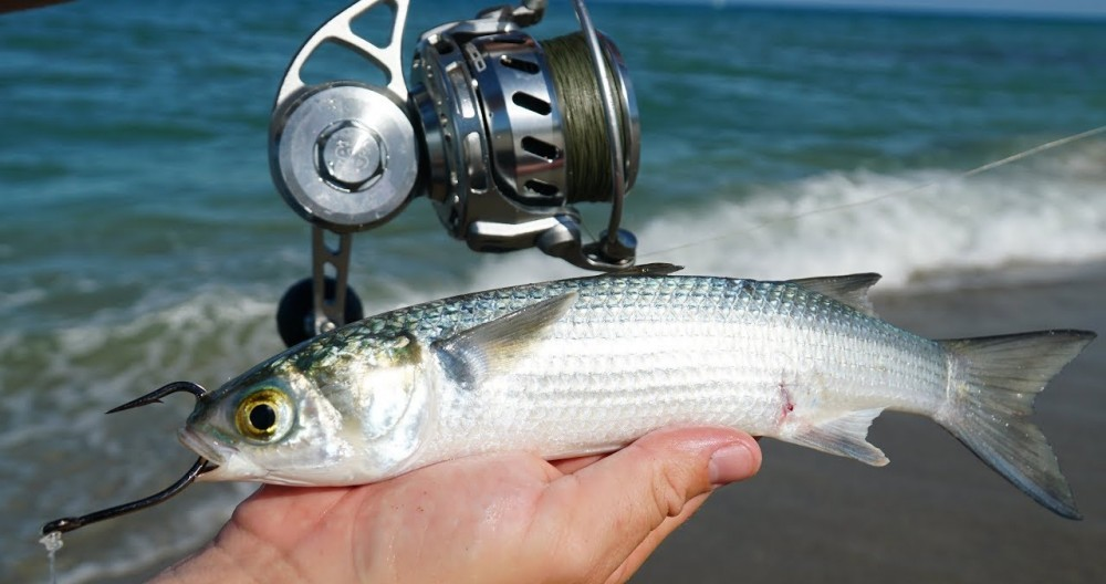 best bait for beach fishing