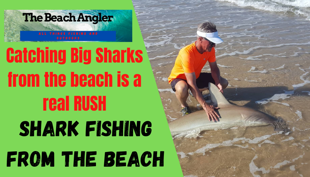 Jerry Gerwick with a hammerhead shark caught from the beach