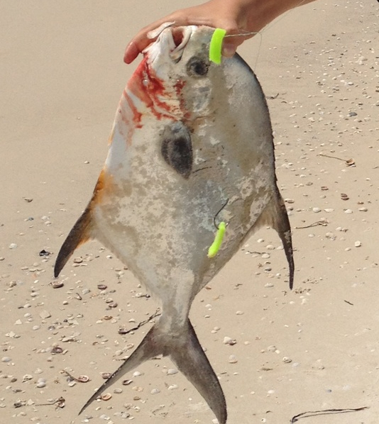 pompano caught on fishbites