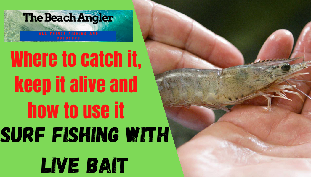 surf fishing with live bait