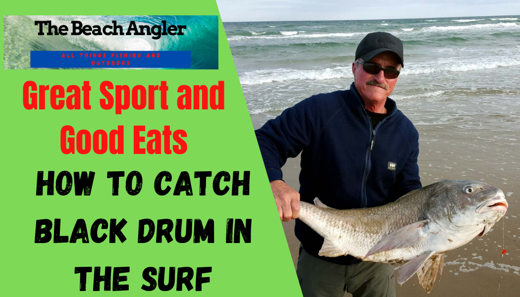 How to Catch Black Drum in the Surf