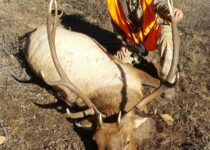 elk hunt - Outfitting a Colorado elk hunt