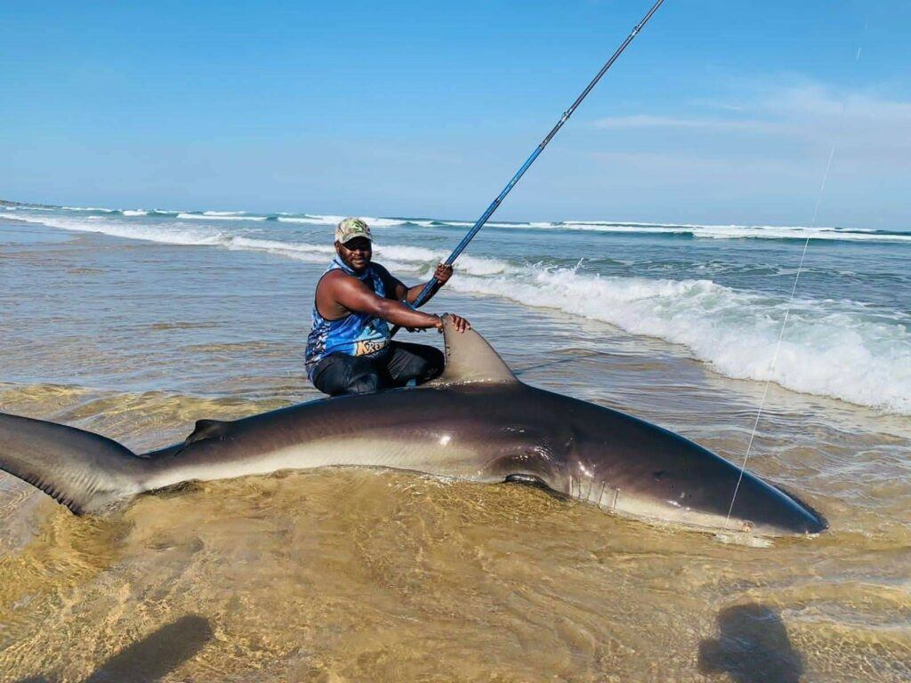Shark caught from the beach